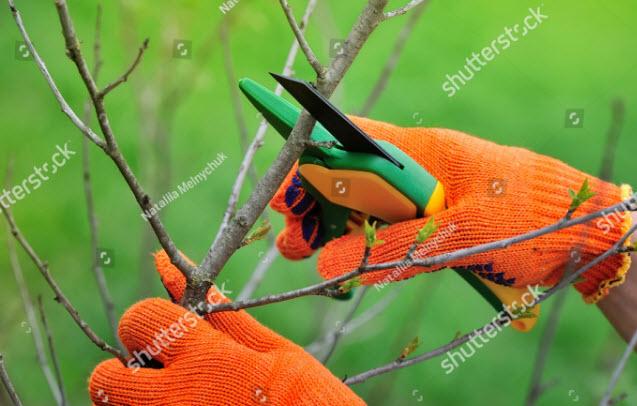 tree-pruning-singapore.jpg