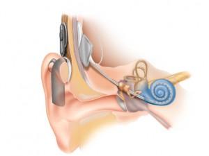 inside the ear